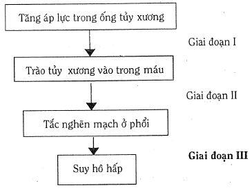 3 giai đoạn TMMDM (theo Hoffmann)